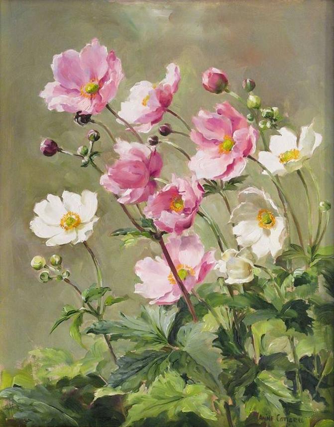 Anne Cotterill34 (16)
