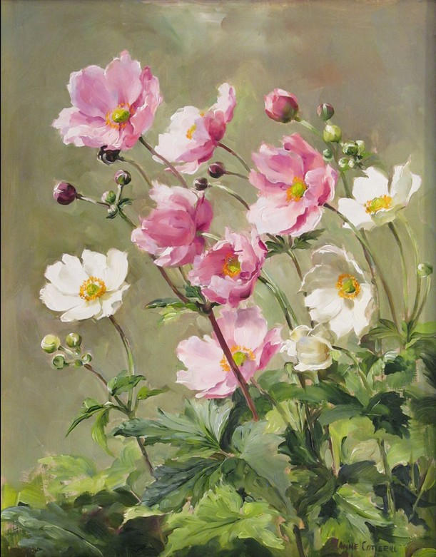 Anne Cotterill34 (5)